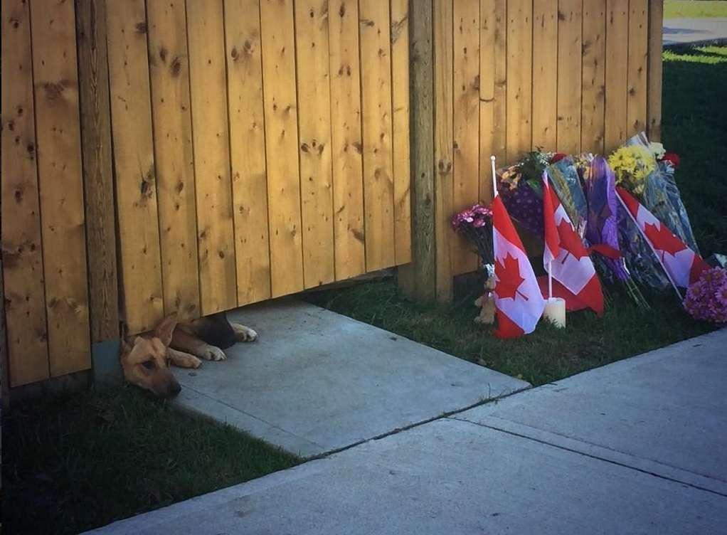 Os cães parecem esperar pelo dono, morto há dois dias Foto: Twitter