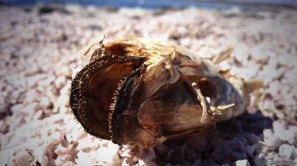 La descomposición de lo peces hace que el olor en la zona sea desagradable Foto: BBCMundo.com