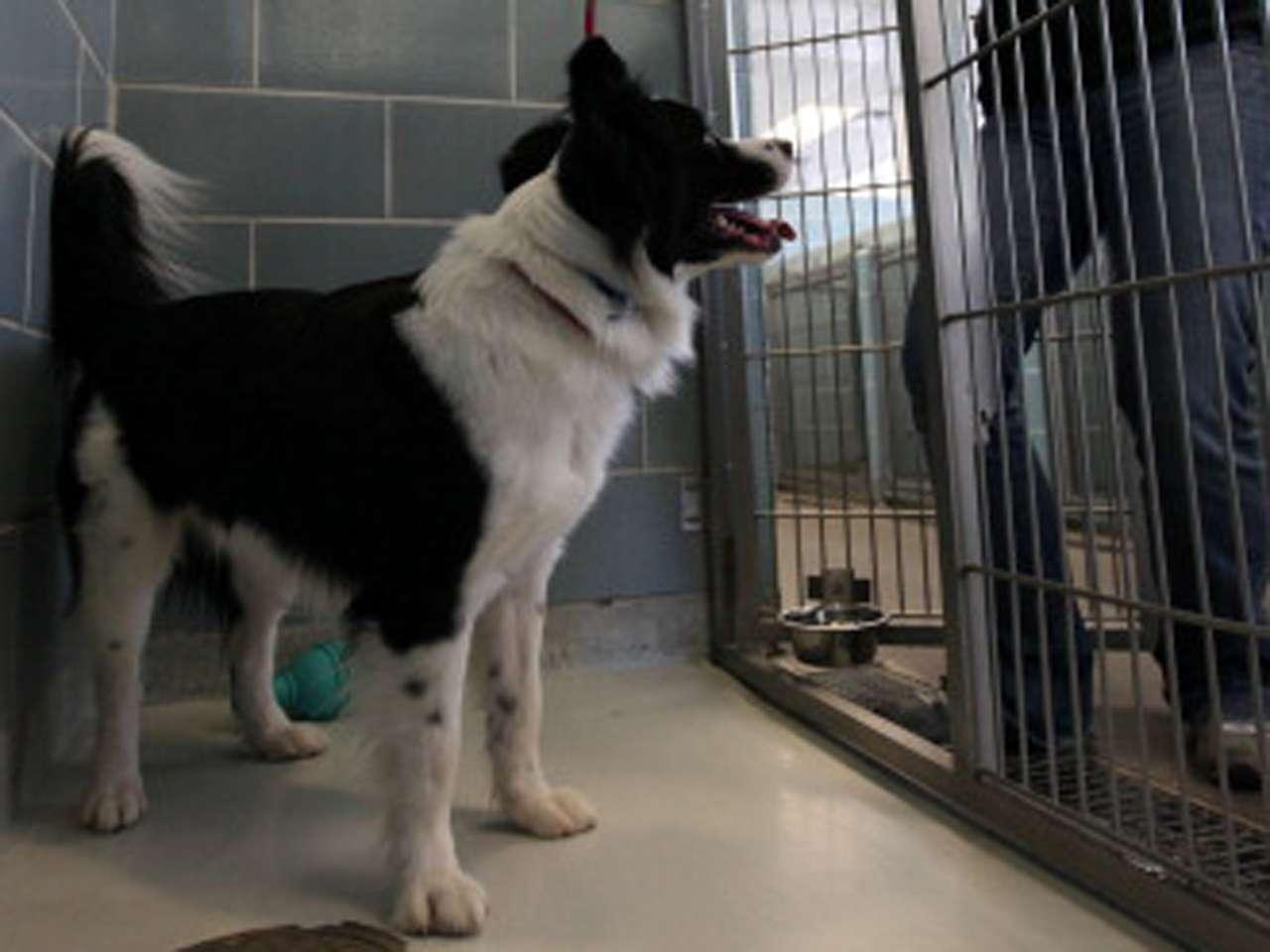 Los terapeutas, como llaman los presos a los canes, son afectuosos y dóciles. Al finalizar la sesión, los animales son conducidos por los internos a sus jaulas. Foto: Getty Images/Archivo