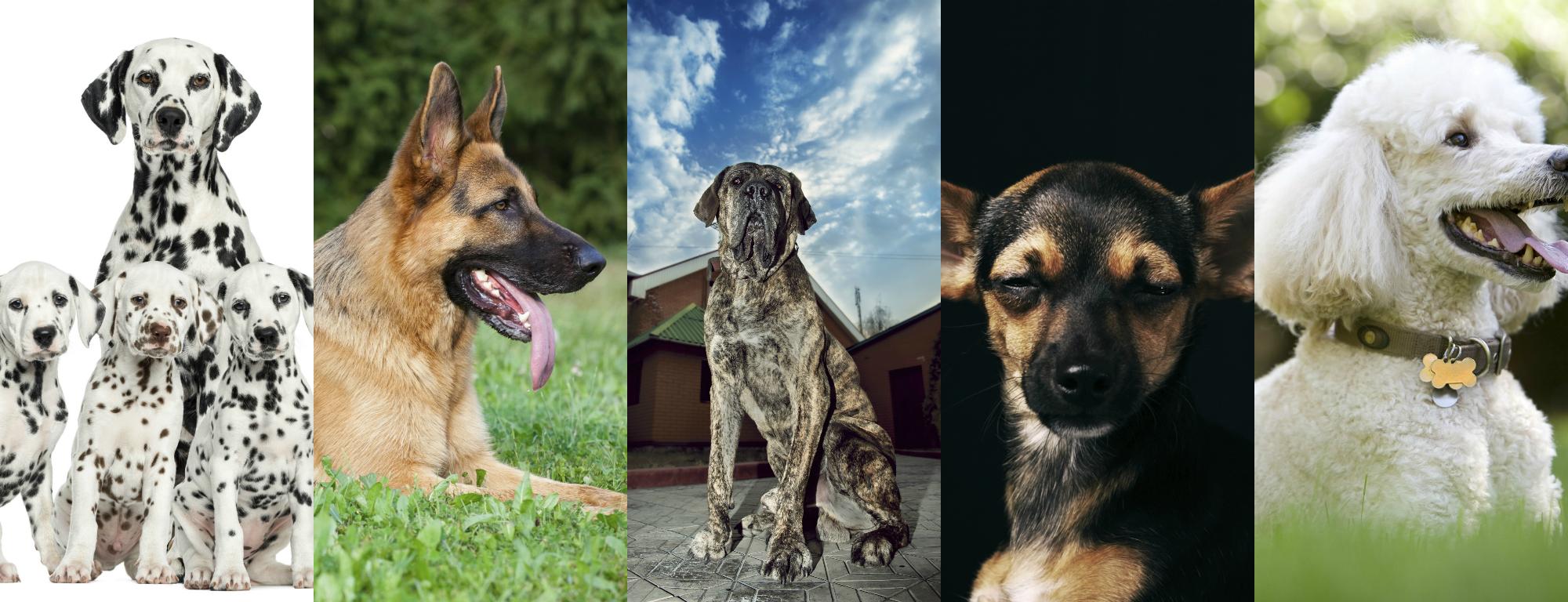 Cachorros que fizeram sucesso no passado e hoje estão esquecidos Foto: iStock/Divulgação