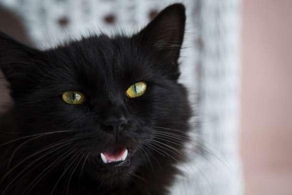"""Después de Halloween, los extraños candidatos a la adopción de gatos negros """"nunca vuelven a llamar"""", dice Kinga Schneider, responsable del Arca de Noé. Foto: Archivo/Getty Images"""