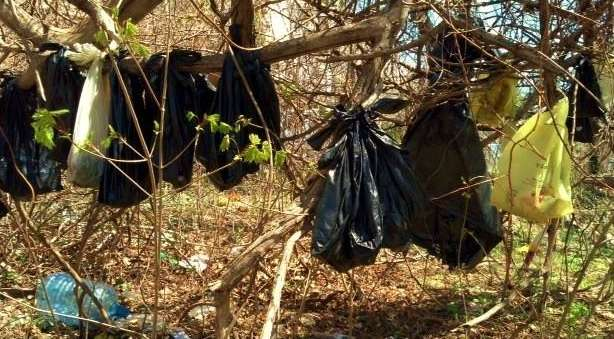 O americano foi acusado de maus tratos e por descartar de forma errada os corpos dos animais, pendurando corpos de 25 gatos dentro de sacos de lixo numa árvore da cidade Foto: Twitter