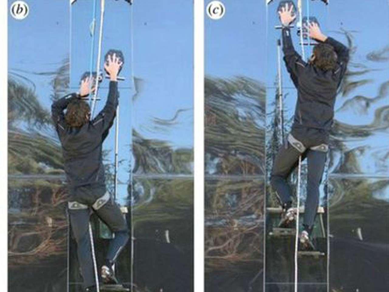 El guante le permitió trepar a un hombre de 70 kilos una pared de vidrio de 3,6 metros de altura. Foto: BBCMundo.com