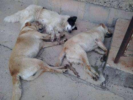Animais foram encontrados nas ruas da cidade Foto: Divulgação/Associação Bonjesuense de Proteção Animal