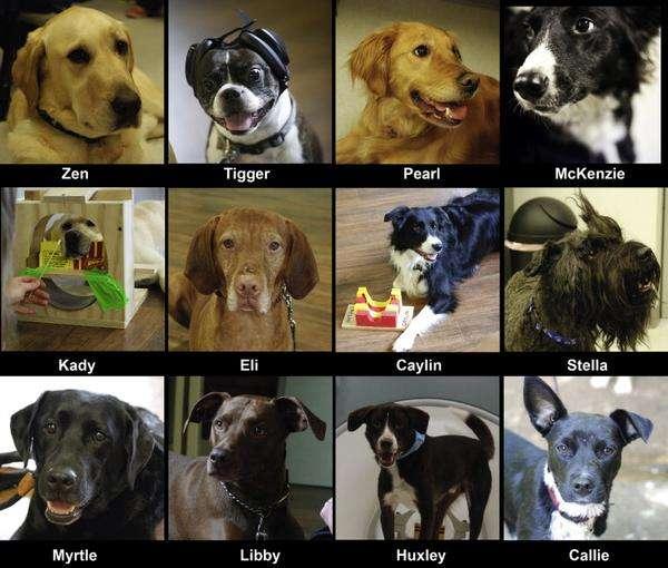 Cães participaram do estudo e demonstraram intensidade nas reações quando sentiram o cheiro de seus donos Foto: Imgur/Reprodução