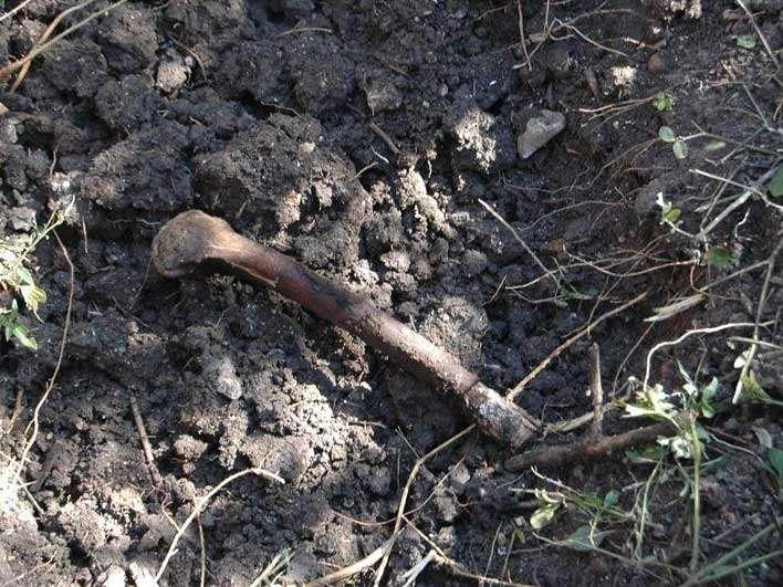 El Equipo Argentino de Antropología Forense (EAAF) identificó tres cuerpos de los 30 encontrados en fosas halladas en Cerro Pueblo Viejo, en Iguala, Guerrero, y determinó que no corresponden a alguno de los 43 normalistas desaparecidos el 26 de septiembre. Foto: EFE en español