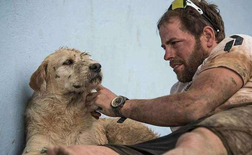 Arthur, el perro salvado por deportistas suecos en Ecuador Foto: Reproducción Facebook Team Peak Performance