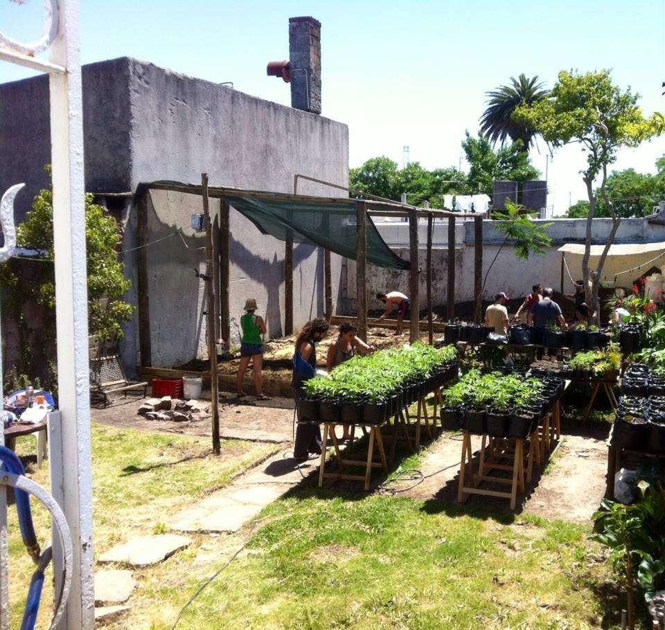 Plantio de mudas no clube de maconha Cluc - Cultivando a Liberdade, em Montevidéu Foto: arquivo/Cluc - Cultivando a Liberdade