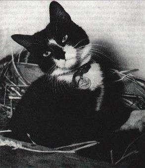 El gato Simon en cuarentena después de regresar al Reino Unido en 1949. Foto: Wikipedia