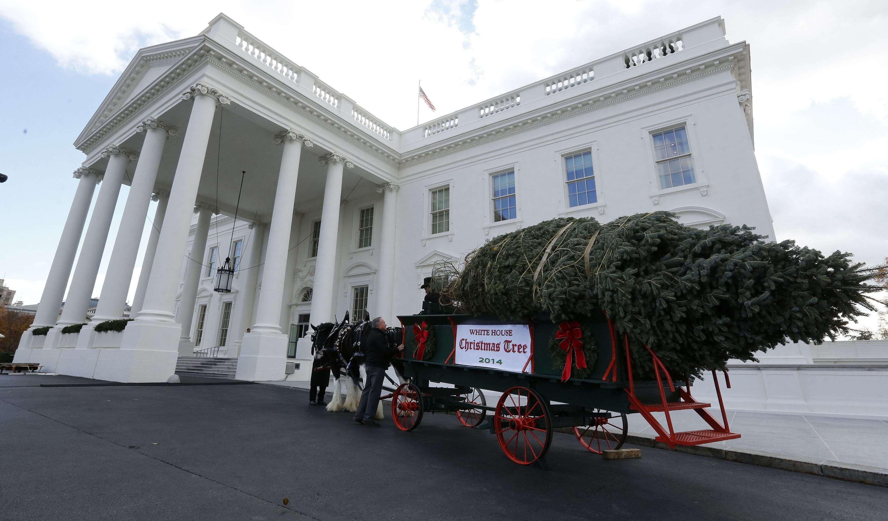 Tras una detallada revisión, la primera dama aceptó el ejemplar que acompañará a la familia Obama durante las fiestas de este año. Foto: Reuters en español