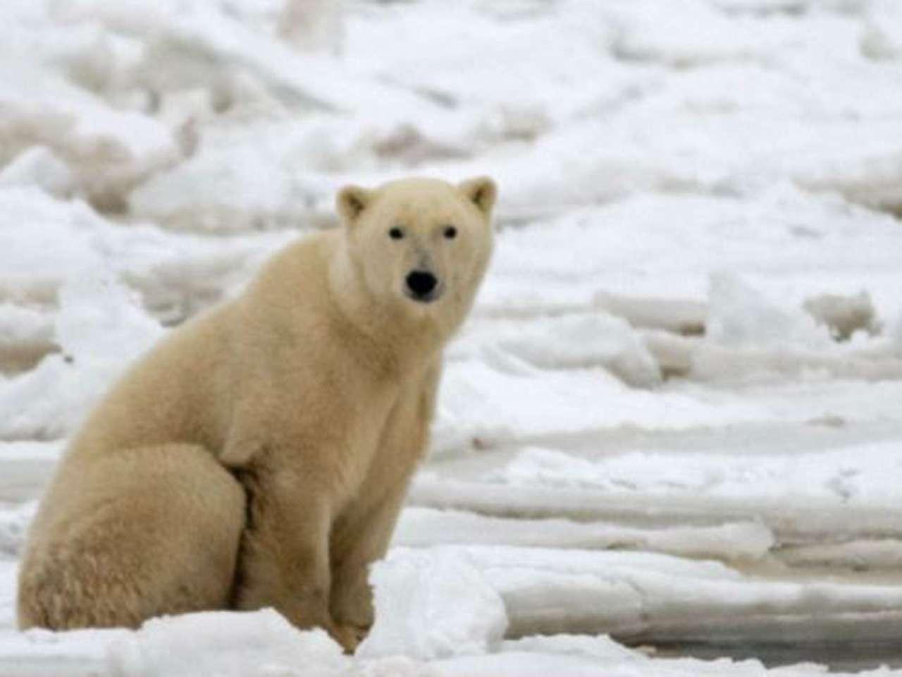 Rusia y Estados Unidos también compiten en la región ártica. Foto: AP en español