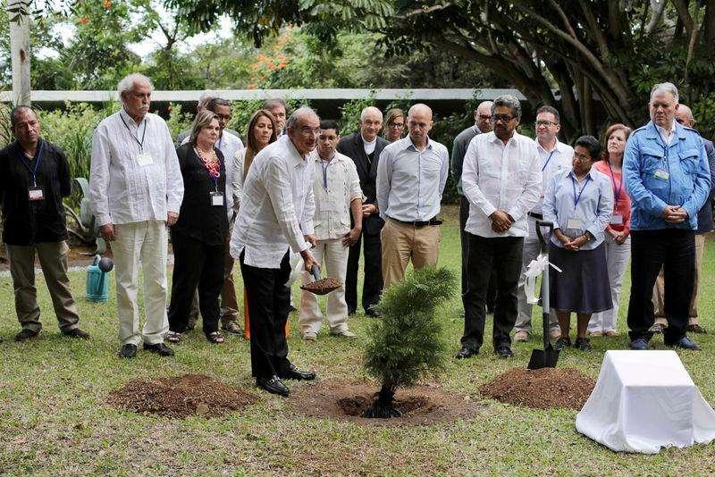 Principal negociador do governo da Colômbia, Humberto de la Calle, planta árvore como parte das negociações de paz do país com as Farc, em Havana. 16/12/2014 Foto: Enrique De La Osa/Reuters