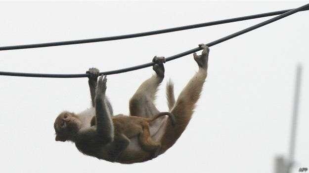 En Delhi se pueden ver monos en los lugares menos pensados. Foto: AFP en español