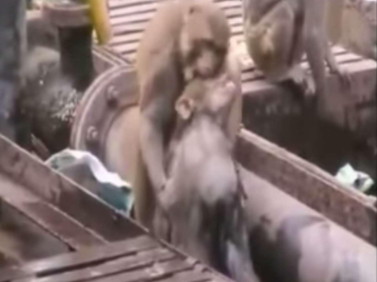 Los changos dieron una lección de compasión a los presentes. Foto: Youtube.com/ Amazing Videos