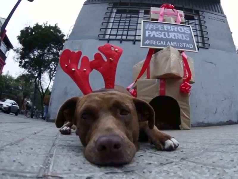 La campaña #PerrosPascueros se convirtió en viral. Foto: Reproducción Youtube