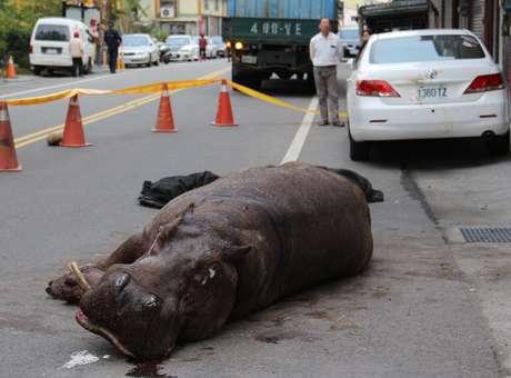 El animal se rompió la pierna después de saltar del vehículo en movimiento y su dolor provocó que derramara algunas lágrimas. Foto: AFP en español