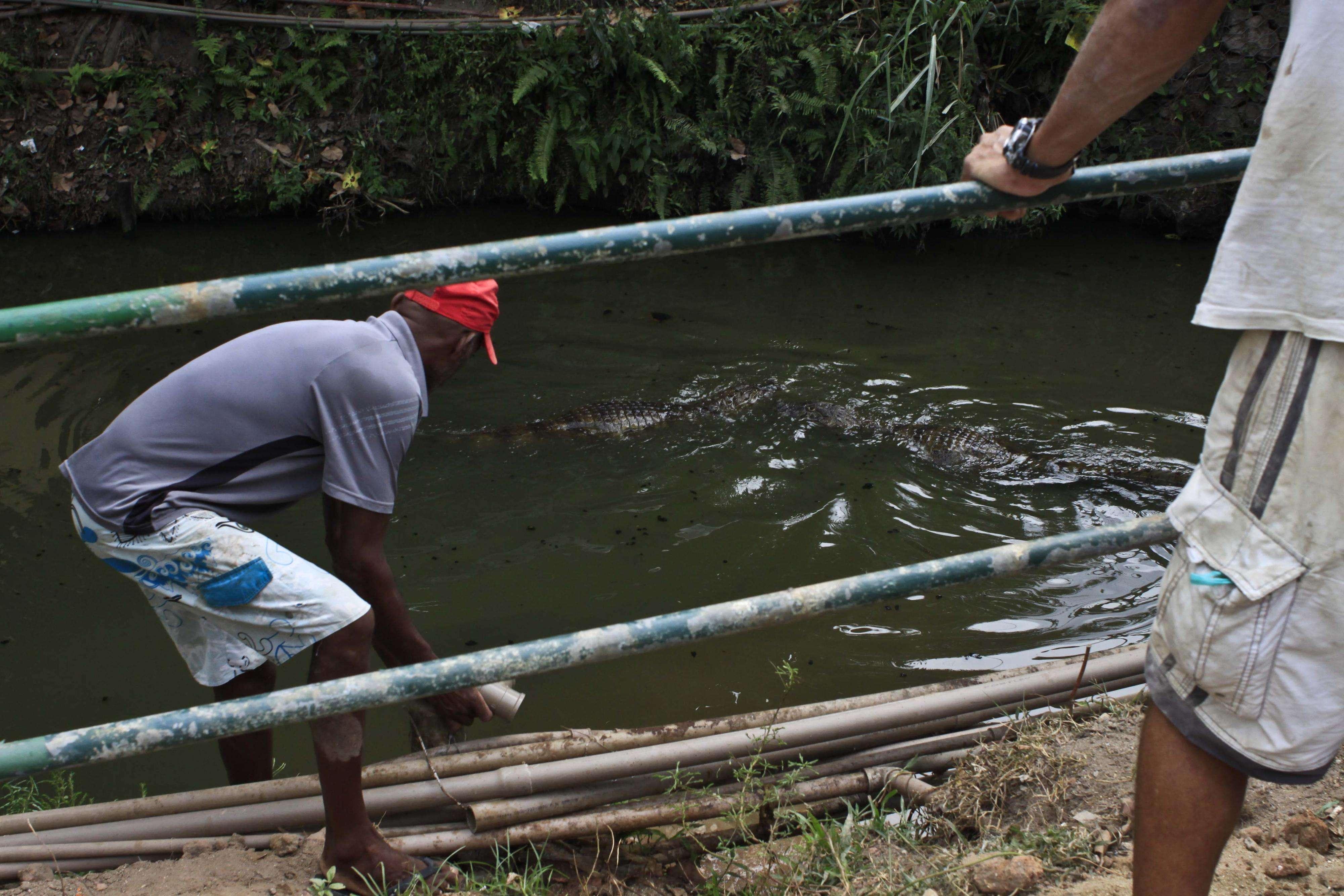 Moradores se arriscam para pegar água de bica no Canal das Taxas, onde vivem jacarés Foto: Ariel Subirá/Futura Press