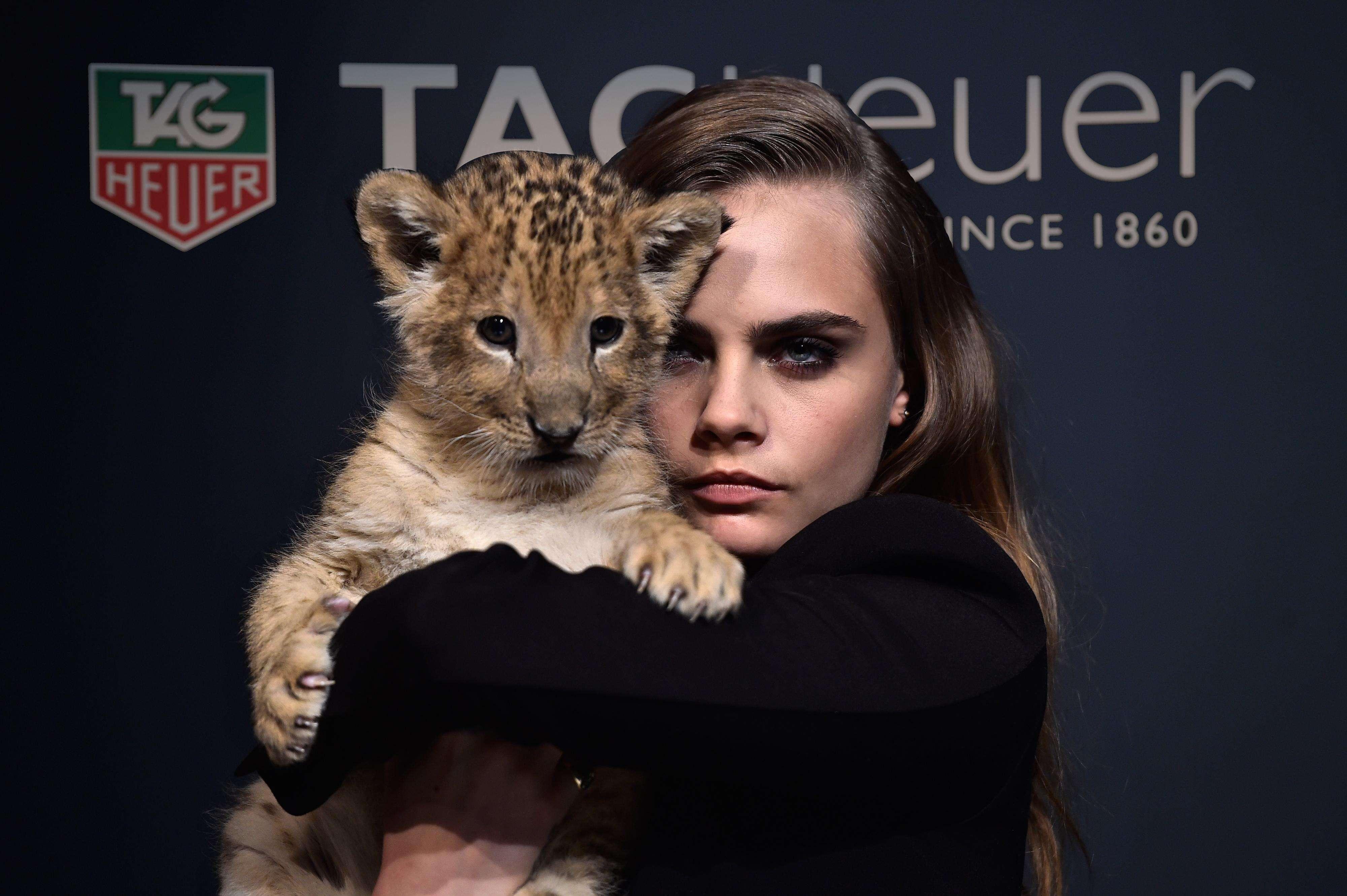 Cara segurou o filhote de leão durante evento da marca de relógios de luxo Tag Heuer Foto: Getty Images