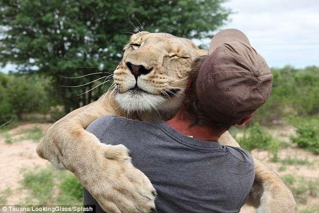 """Todos os dias, quando Gruener vem abrir a jaula da sua """"amiga"""", Sirga pula em cima dele e lhe dá um abraço Foto: Daily Mail/Reprodução"""