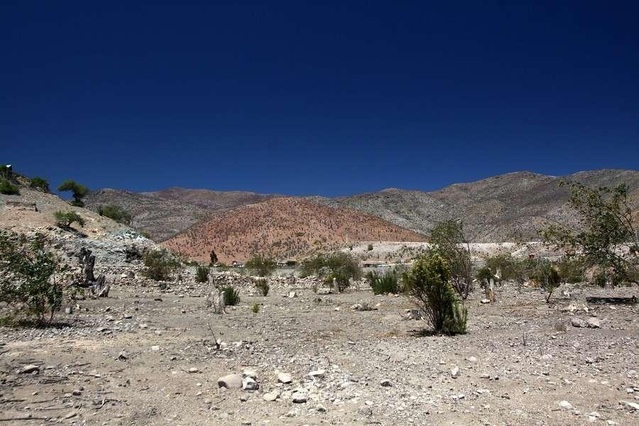 Las cosechas en la Región de Coquimbo están en peligro. Foto: Agencia UNO
