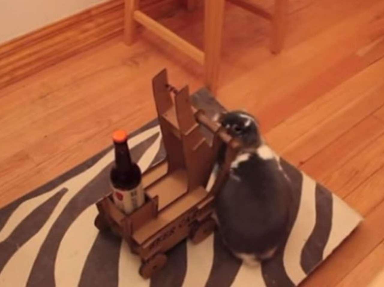 El conejo fue entrenado por el novio de su ama. Foto: YouTube.com
