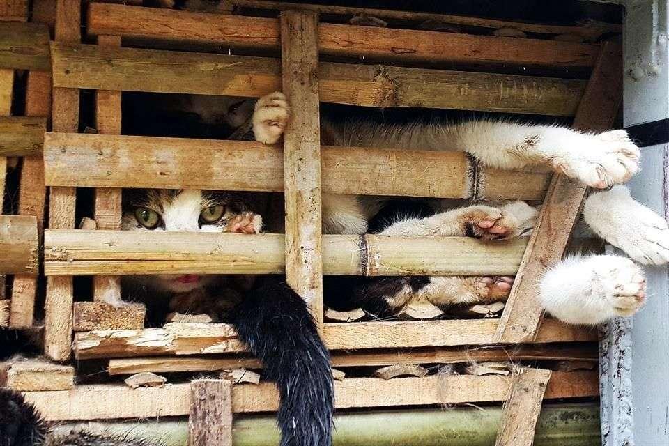 Fotografía de los gatos hacinados en cajas dentro de un camión capturado en Vietnam Foto: AFP en español