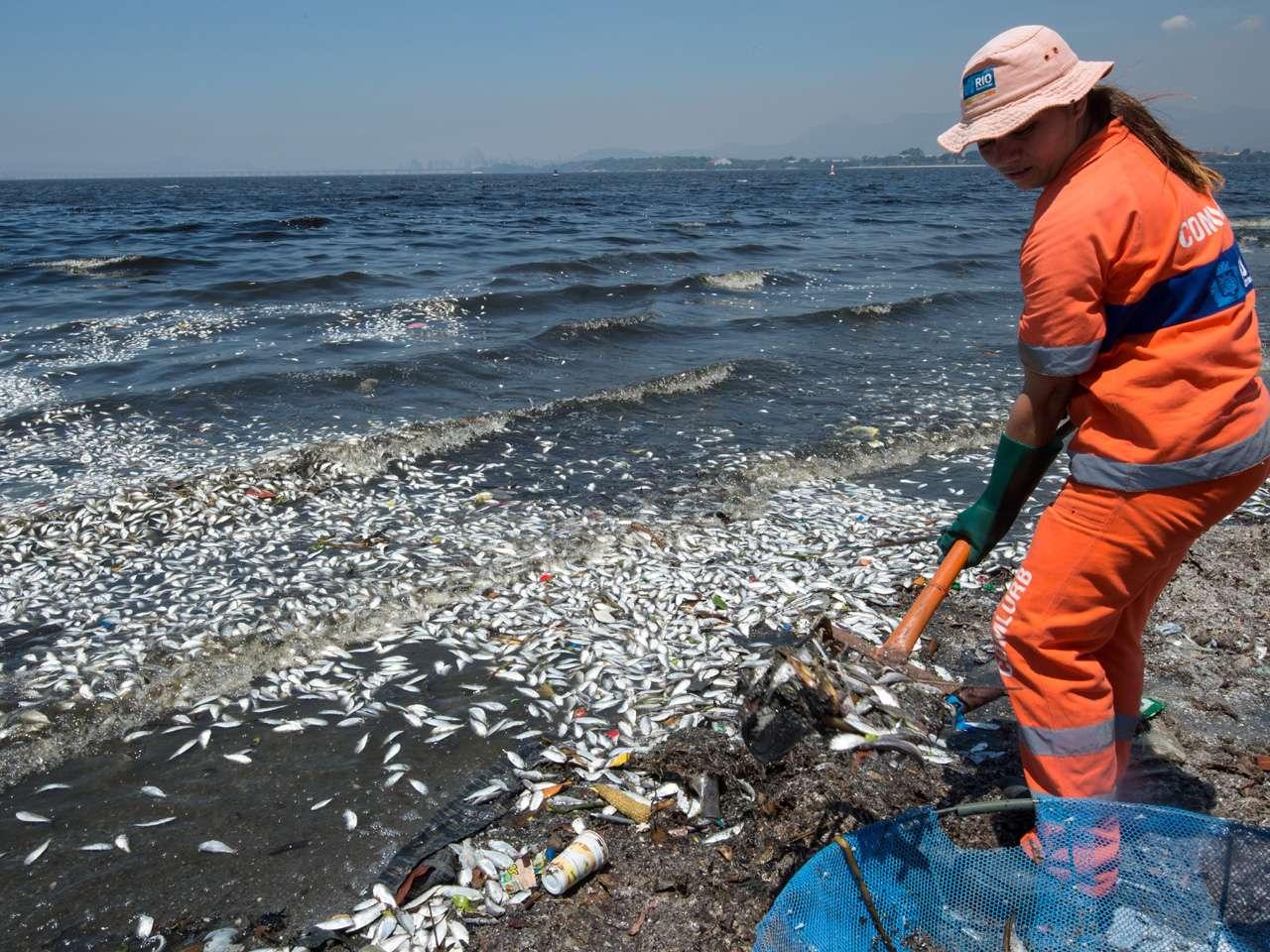 Trabajadores municipales remueven miles de peces muertos de la Bahía de Guanabara, cerca del aeropuerto internacional de Río de Janeiro, Brasil. Foto: AFP en español