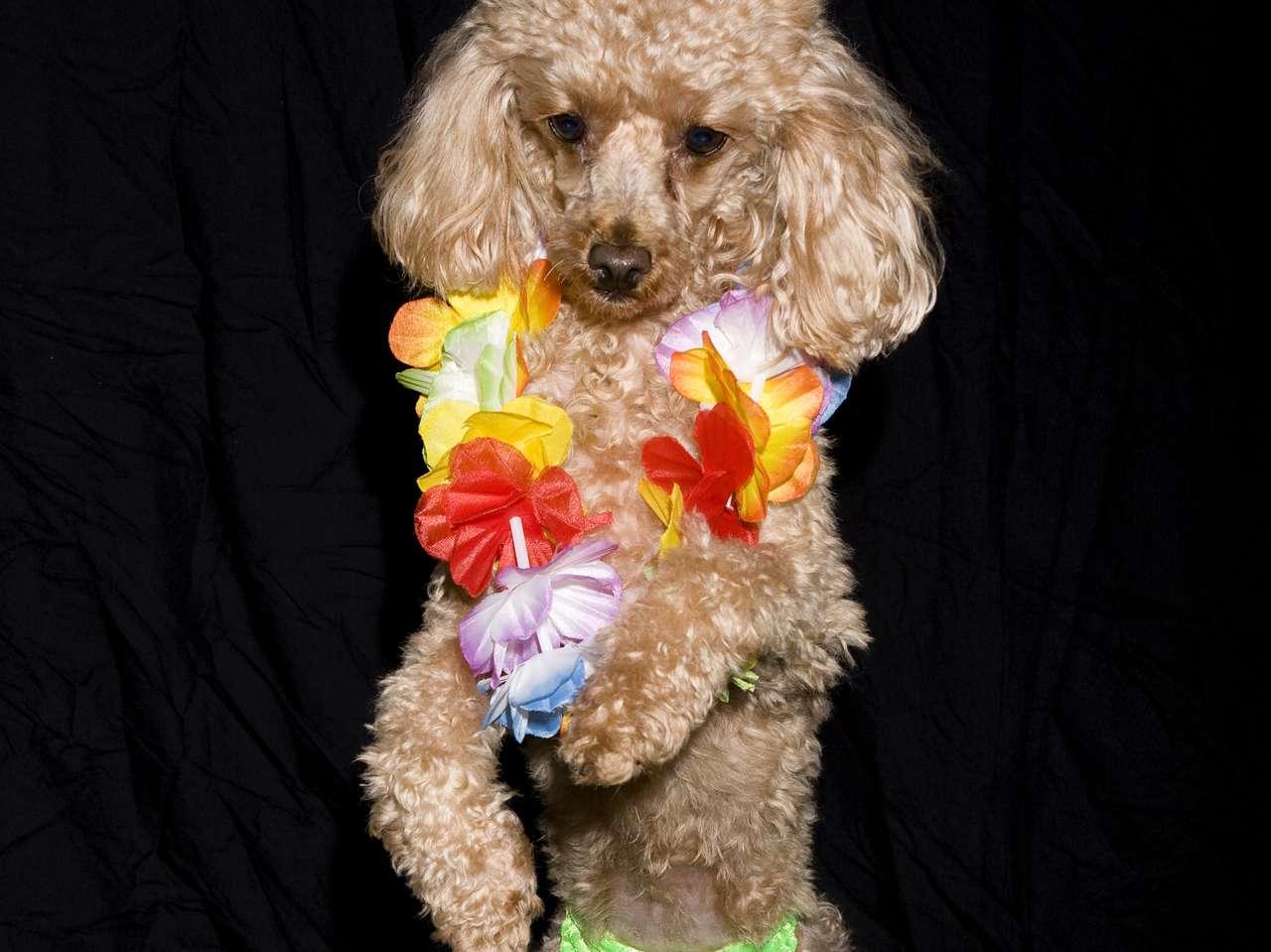 Los perros caminan en dos patas y con un poco de música son estrellas de Youtube. Foto: iStockphoto