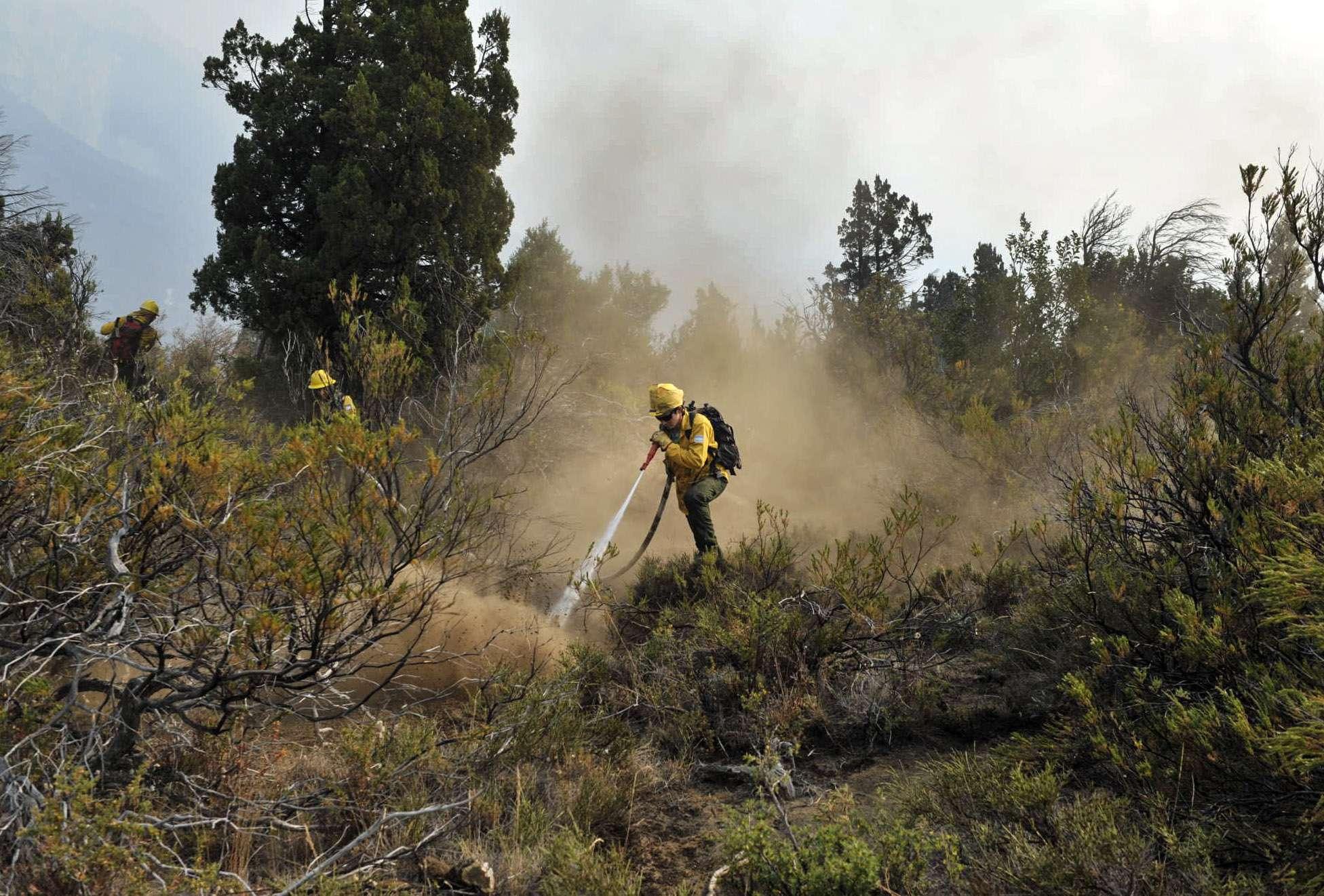 Los incendios consumieron más de 10 mil hectáreas de bosques. Foto: Noticias Argentinas