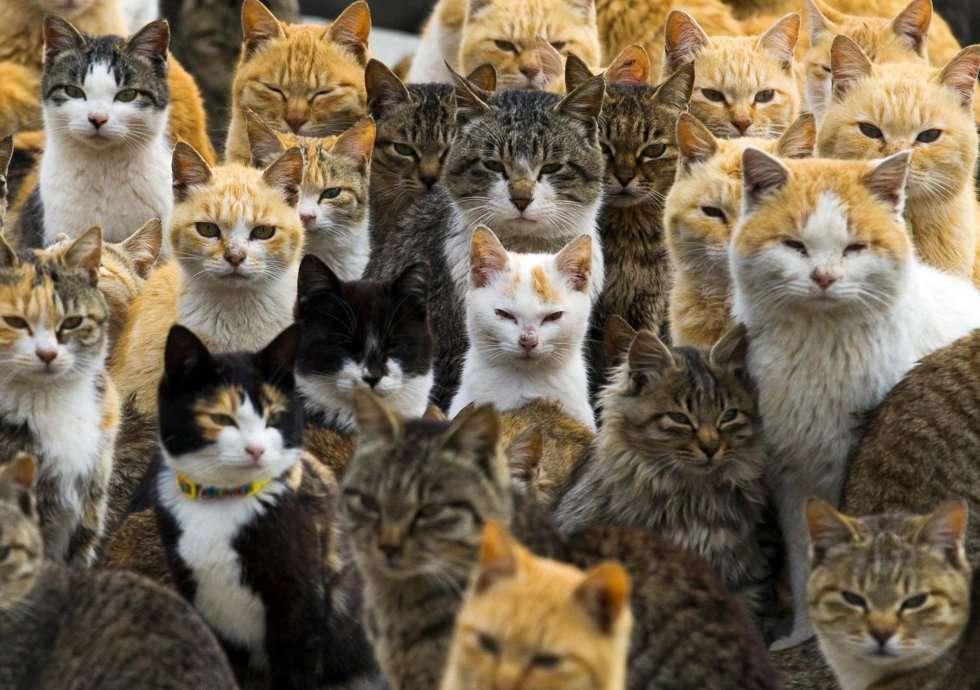 La Isla de los Gatos Foto: Reuters
