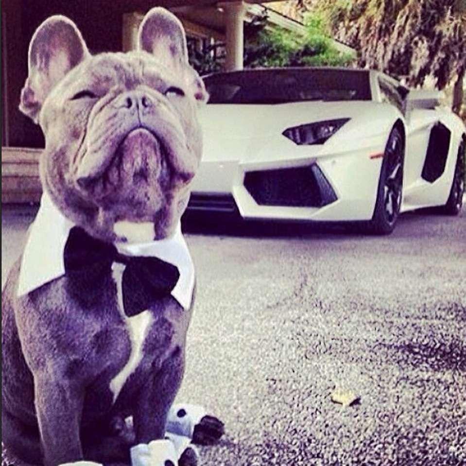 Perros Millonarios Foto: Instagram / Rich Dogs Of Instagram
