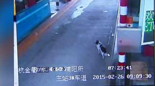 O animal não perde as esperanças e vai feliz ao encontro dos veículos que passam na estrada onde foi abandonado Foto: The Mirror/Reprodução