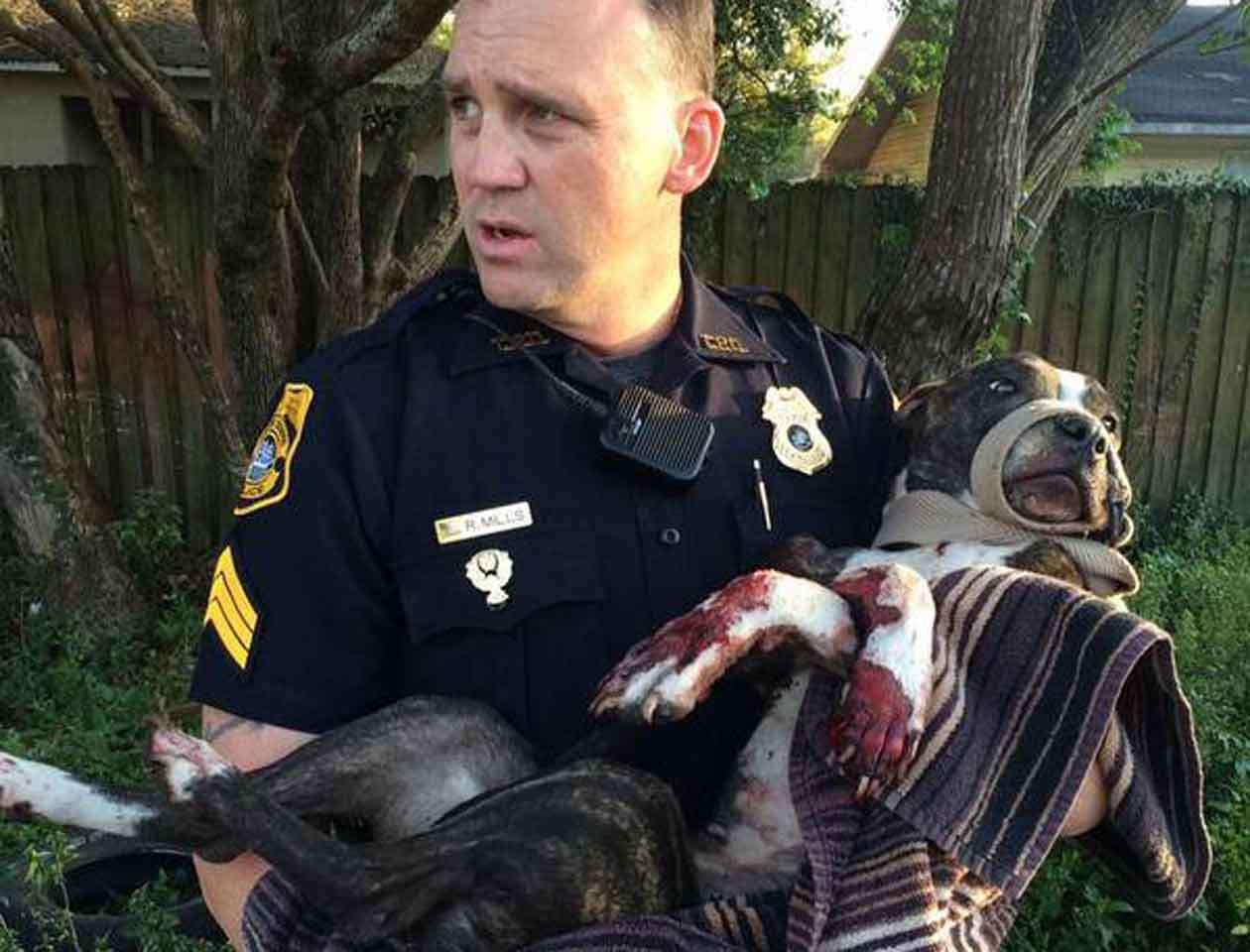 La Policía de Tampa solicitó a la ciudadanía información para hallar a los responsables de este acto brutal. Foto: humanesocietytampa.org