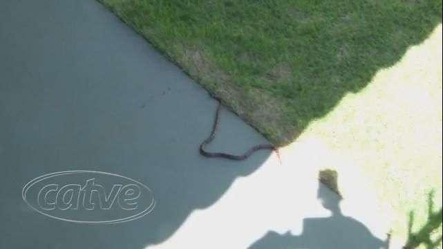 Mulher se assusta com cobra na calçada de casa