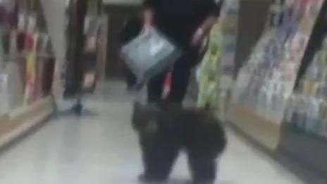 Filhote de urso invade loja nos EUA