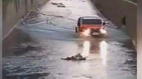 Homem resgata cadela presa em rio