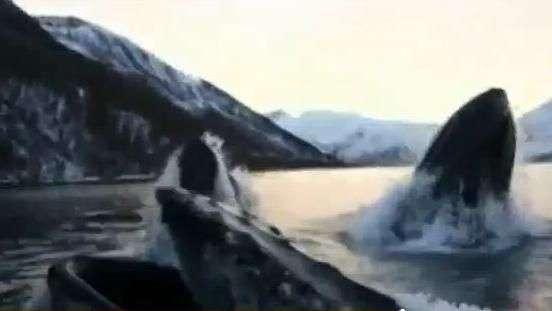 Pescadores são surpreendidos por baleias jubarte na Noruega