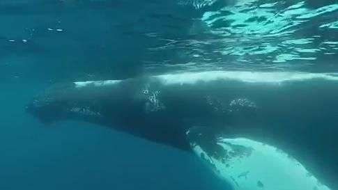 Dupla embarca em um mergulho com baleias jubarte