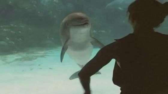 Golfinho parece rir enquanto ginasta faz acrobacias