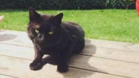 Gato usado como 'alvo' sobrevive a duas saraivadas de chumbo