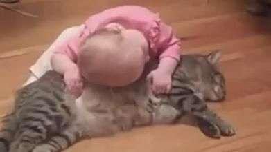 Gato prova que os melhores amigos dos bebês são os felinos