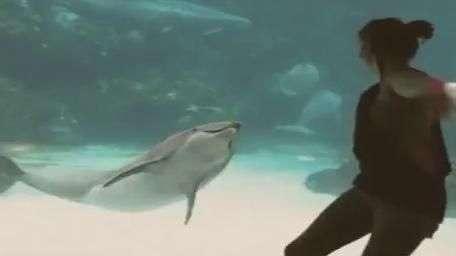 Garota chama a atenção de golfinhos fazendo acrobacias