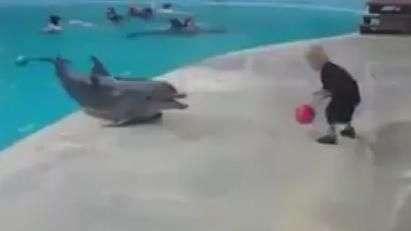 Bons de bola! Menino se diverte 'jogando' com golfinho