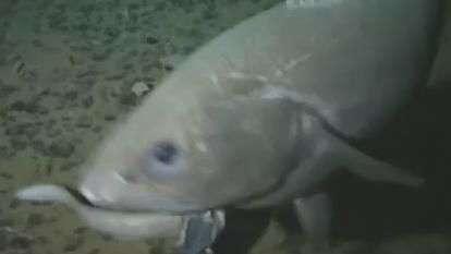Pesquisadores captam imagem de peixe em habitat mais ...