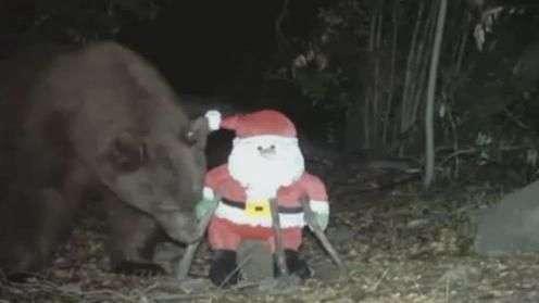 Urso ataca Papai Noel em montanha da Califórnia