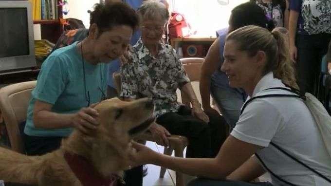 Heróis de quatro patas: ONG realiza terapia com animais