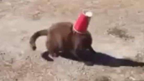 Cachorro salva gato com uma atitude inesperada