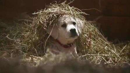 Cãozinho é salvo por cavalos em comercial para o Super Bowl