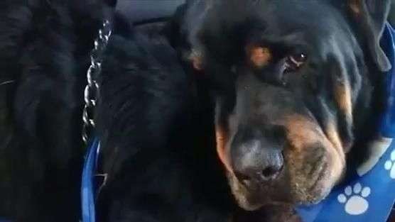 Merecem o céu: cão se recusa a sair do lado do irmão morto