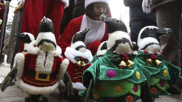 Desfile navideño de pingüinos en Corea del Sur